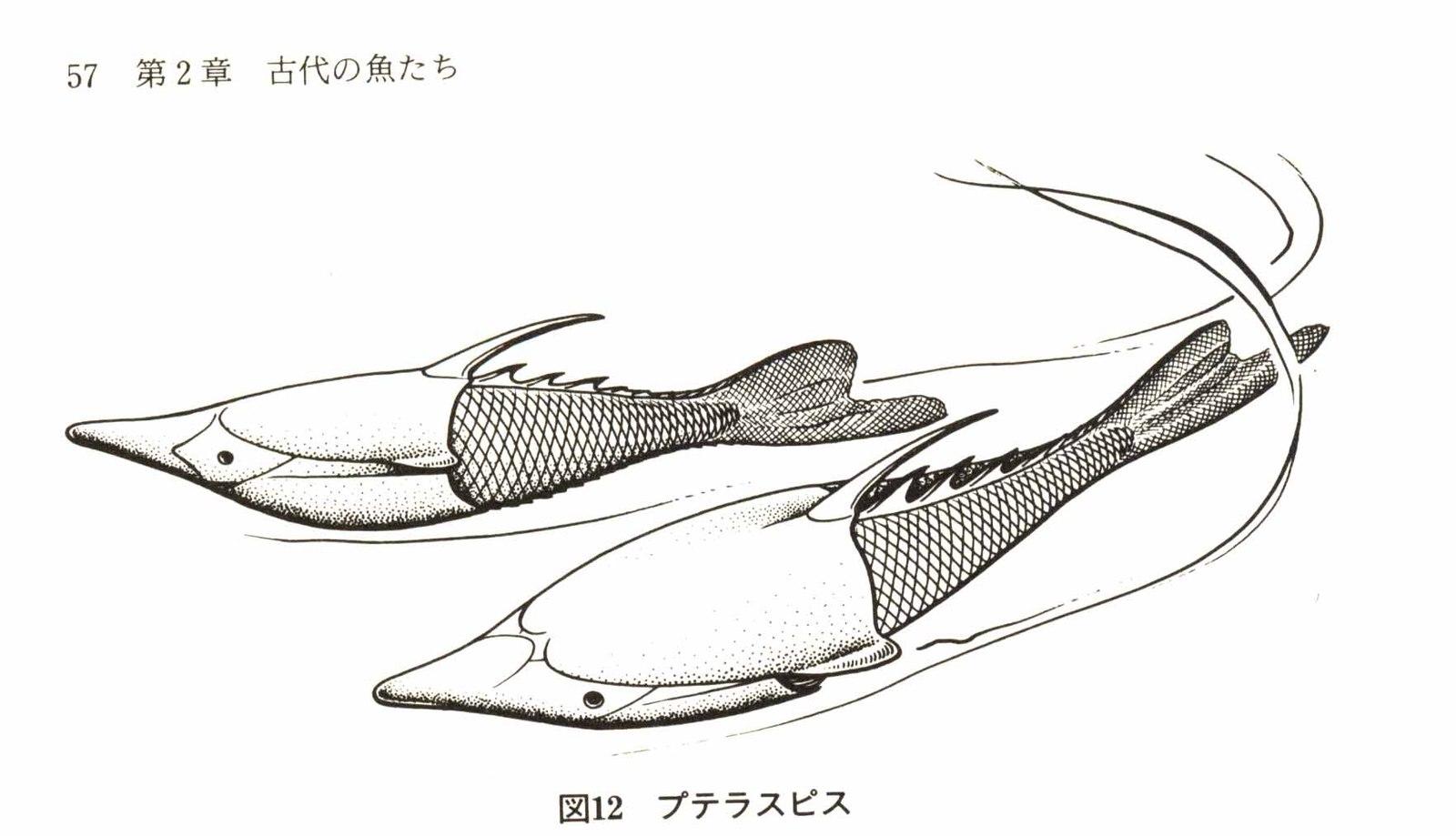 魚の系統進化その3: 魚の絵とイ...